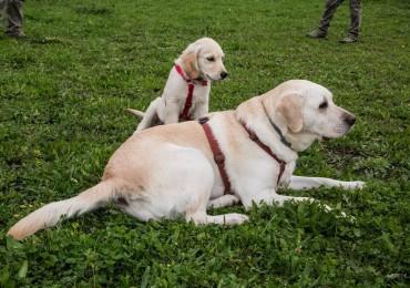 Ci vediamo in area cani – Barberino