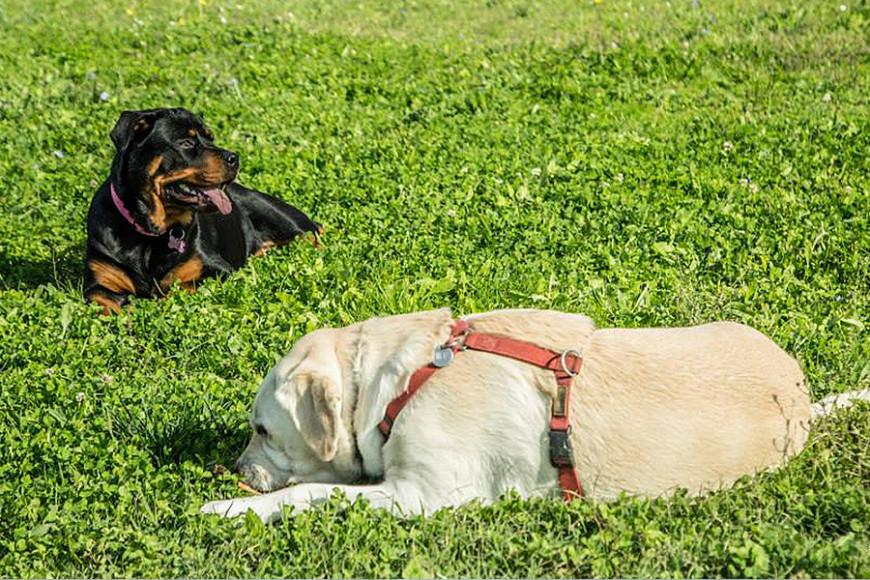 Ci vediamo in area cani – Scarperia