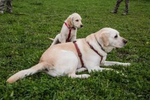 Ci vediamo in area cani a Barberino