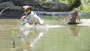 acquaticità per cani