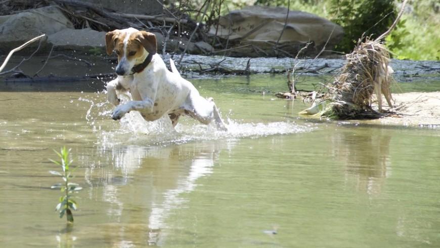 In acqua con Fido