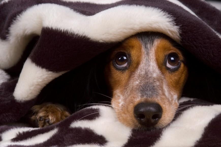 Seminario su paure e fobie nel cane