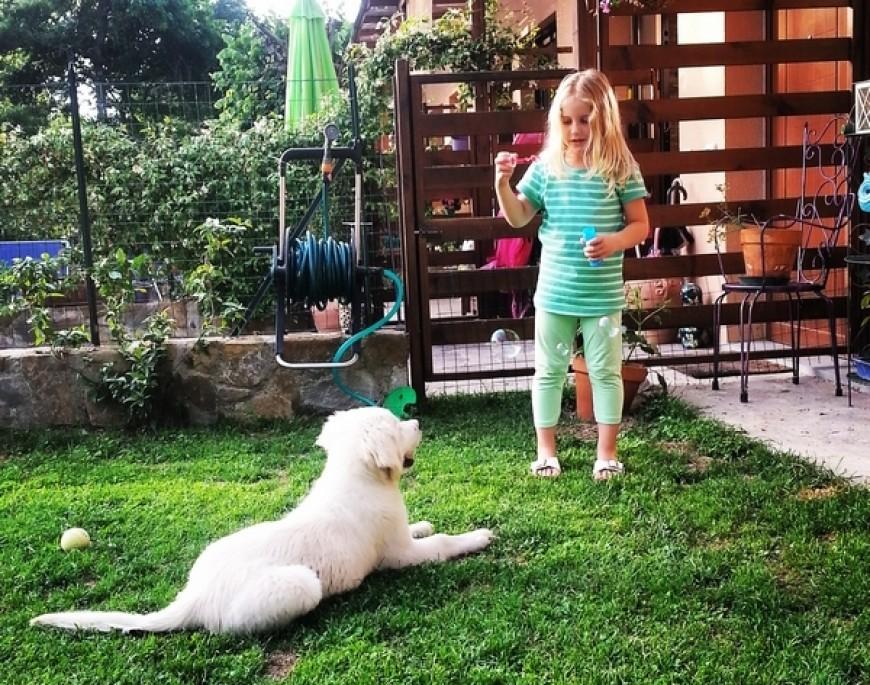Cani e Bambini: relazione e gioco