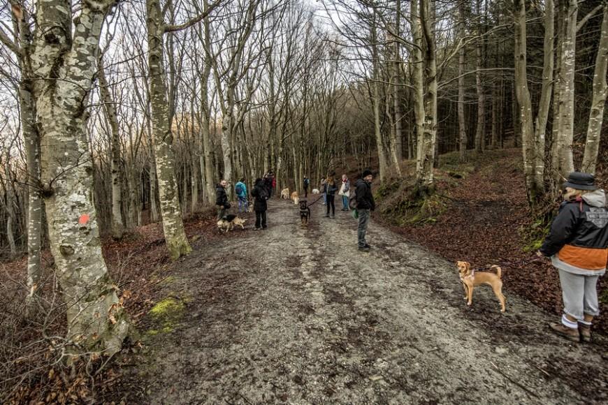Dog Trekking di Natale e pranzo sociale