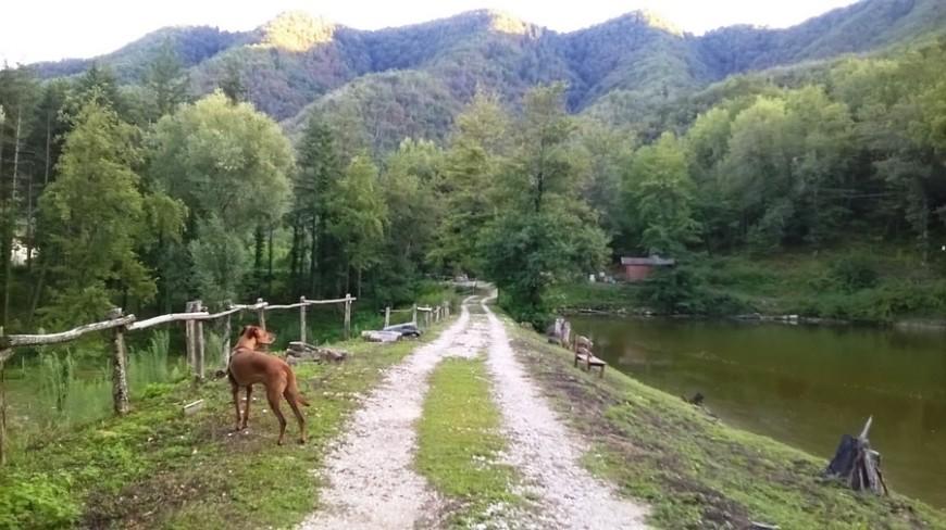 La pensione per cani
