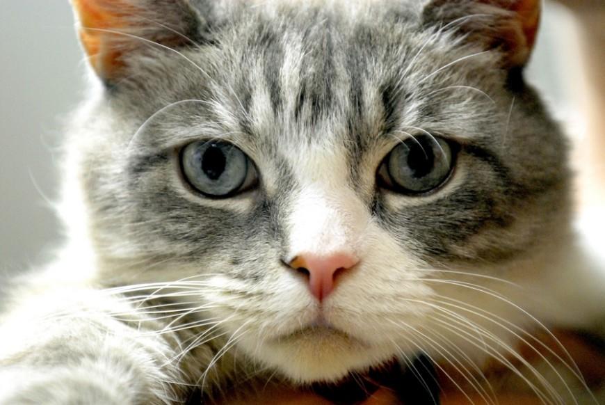 Il magico mondo del gatto