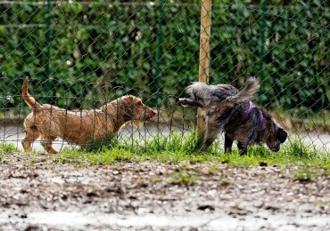 Consulenze gratuite area cani Barberino