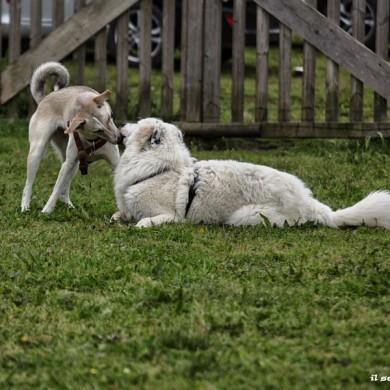 Laboratori di socializzazione: come comunicano i cani